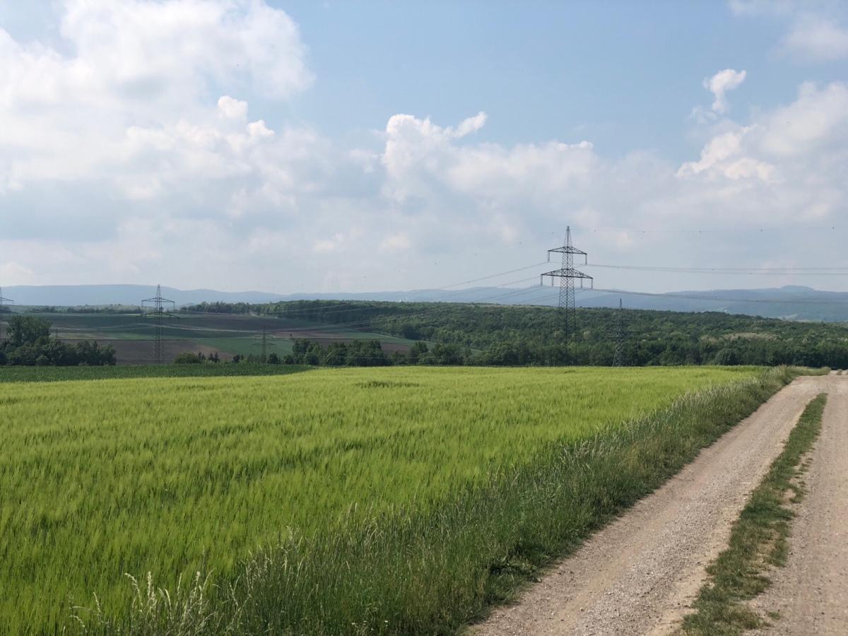 Tag 3: Großhöflein-Wiesen
